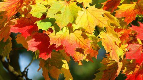 Quand l'automne cogne à nos portes !