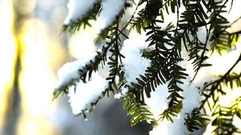 Et si Noël rimait avec soleil cette année?