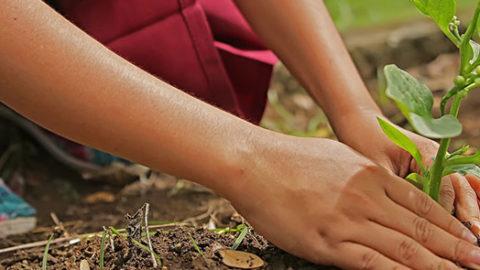 Après la pluie le beau temps… pour faire le plein et jardiner!